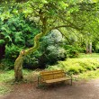 Bench under tree in park - Stock Photo