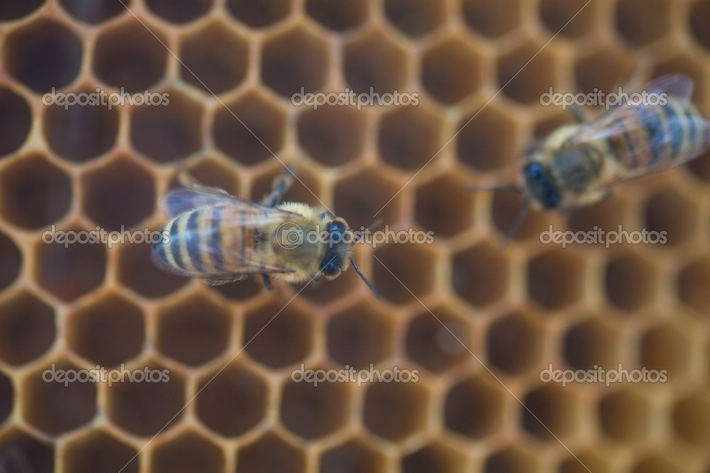 Shot of bees swarming on a honeycomb — Stock Photo #11562932