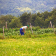 Cultivating the land — Stockfoto