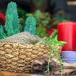 Cactus — Stock Photo #12168896