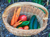 Vegetables inside a wicker basket — Stock Photo