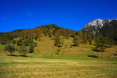Tolminska migovec, slovenia — Foto Stock