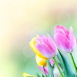 Tulips in the blurry background. — Stock Photo
