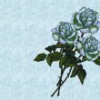 White Roses on Sea Blue Background — Stock Photo