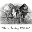 Horses in Pencil: Getting Hitched - Stock Photo
