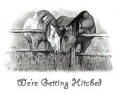 Horses in Pencil: Getting Hitched — Stock Photo