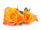 Two orange roses — Stock Photo