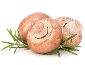 Brown champignon mushroom and rosemary leaves — Stock Photo