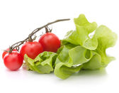 Fresh lettuce salad leaves bunch and cherry tomato — Stock Photo