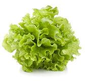 Bando de folhas de salada de alface fresca — Foto Stock