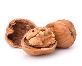 Walnut — Stock Photo