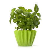 Sweet basil leaves — Stock Photo