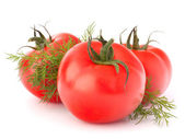 Three tomato vegetables and dill leaves still life — Stock Photo