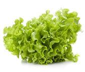Fresh lettuce salad leaves bunch — Stock Photo