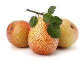 Pear fruits — Stock Photo