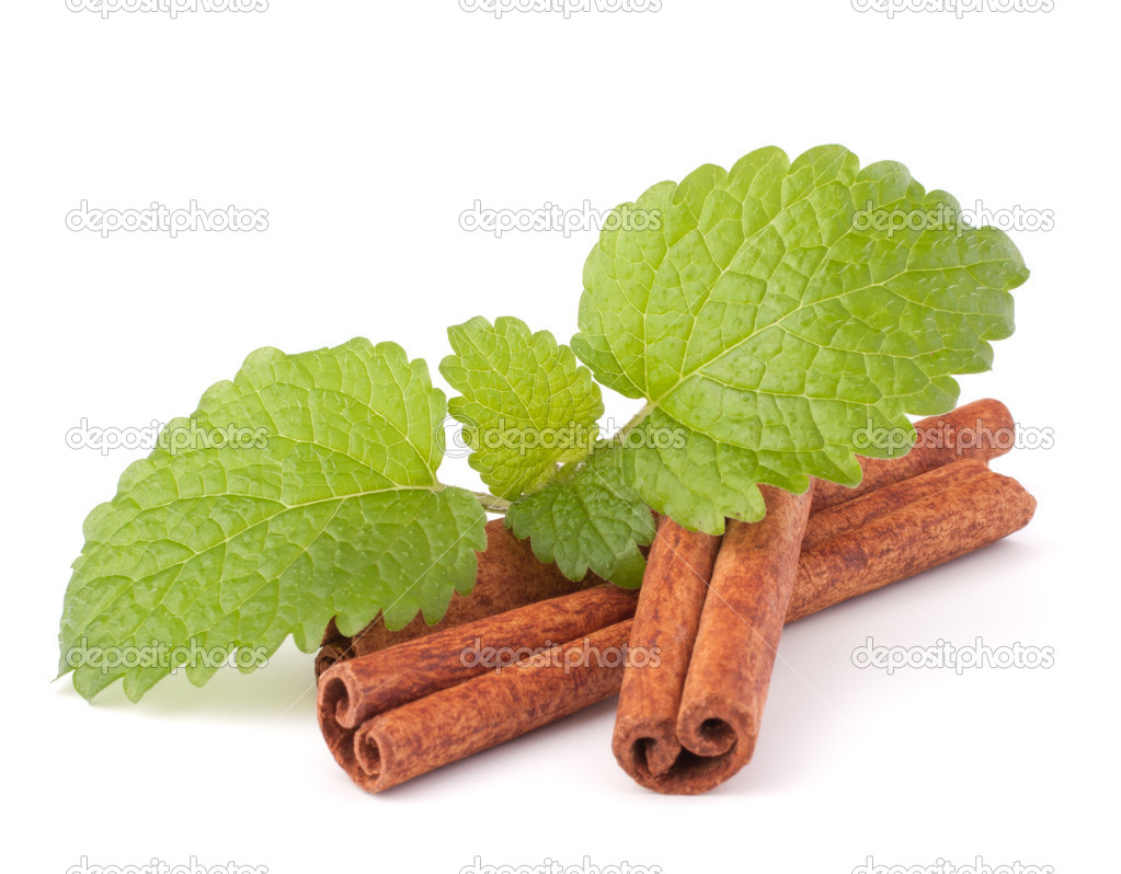 Cinnamon sticks and fresh mint leaf isolated on white background  Stock Photo #12282748