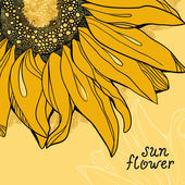 Sunflower vector background greetings card — Stock Photo