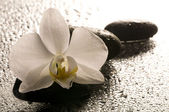 White orchid and stones over wet surface with reflection — Stock Photo