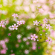pink, spring flowers blossoms on bokeh background — Stock Photo