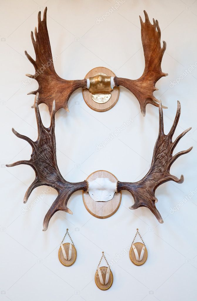 Hunting trophy room in the medieval castle  Stock Photo #12032036