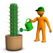 Cacti Gardener — Stock Photo