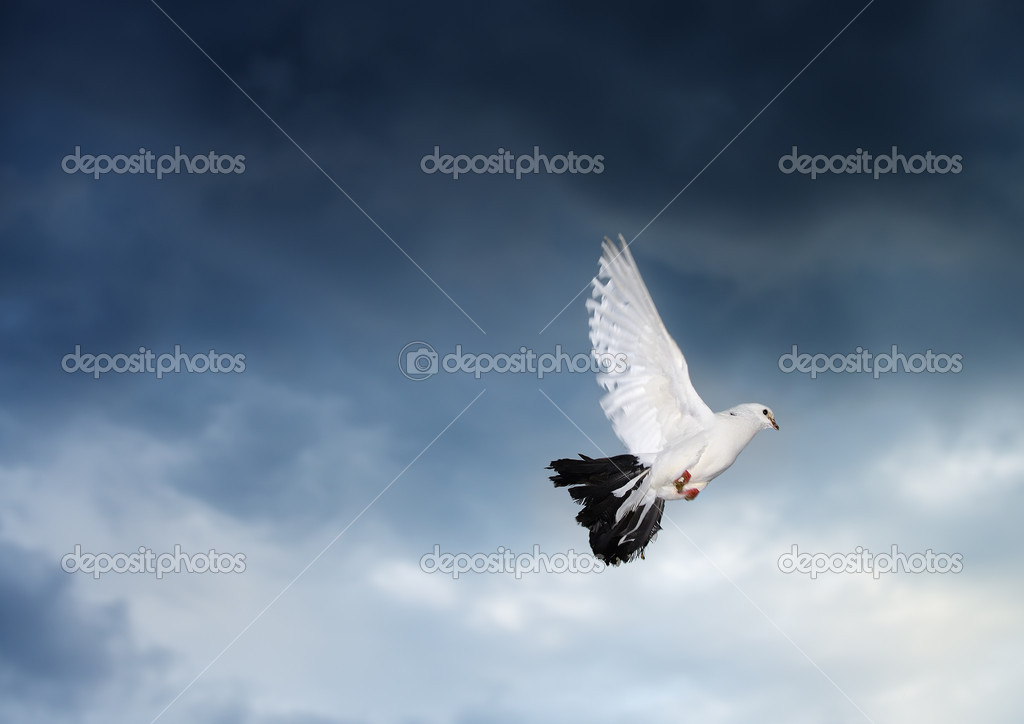 Flying dove on the stormy sky. Photo in motion — Stock Photo #12024046