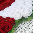Beautiful perfect red and white roses — Stock Photo