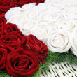 Red and white roses — Foto Stock