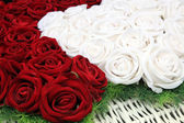 Roses rouges et blanches — Photo