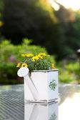 Fiori gialli in annaffiatoio — Foto Stock