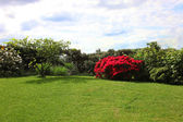 Beautiful green lawn and flowering shrubs — Stock Photo