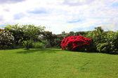 Belle pelouse verte et arbustes à fleurs — Photo