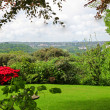Stock fotografie: Lush green landscape with flowering shrubs