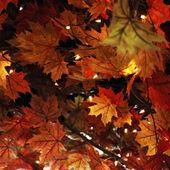 осенний фон листа — Стоковое фото