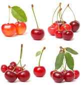 Cherry collection — Stock Photo