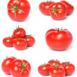 Tomato collection — Stock Photo