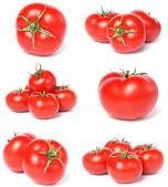 Tomato collection — Stock Photo