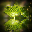 Beautiful water drops on a leaf  reflected in water — ストック写真