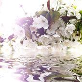 Krásné bílé květy se odráží ve vodě — Stock fotografie