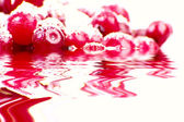 Red berries reflacting in water — Stock Photo