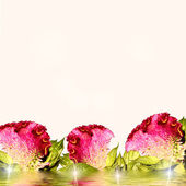 Fresh branch of zelosia flowers, with copyspace and shallow dept — Stock Photo