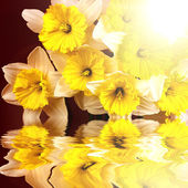 Beautiful spring flowers reflecting in water — Stock Photo