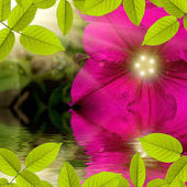 Flower with sun on back side reflecting in water — Stock Photo