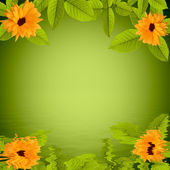 Natural green background with flowers reflected in water — Stock Photo