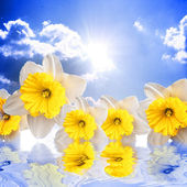 Beautiful spring flowers on the sky background reflacting in wat — Stock Photo