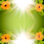 Natural green background with flowers and sun reflected in water — Stock Photo