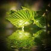 Vackra vatten droppar på ett blad som återspeglas i vatten — Stockfoto