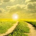 vägen i fältet och solen — Stockfoto