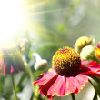 Summer wildflowers in the sunlight — Stock Photo #11915906