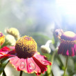 Stock Photo: Summer wildflowers in the sunlight